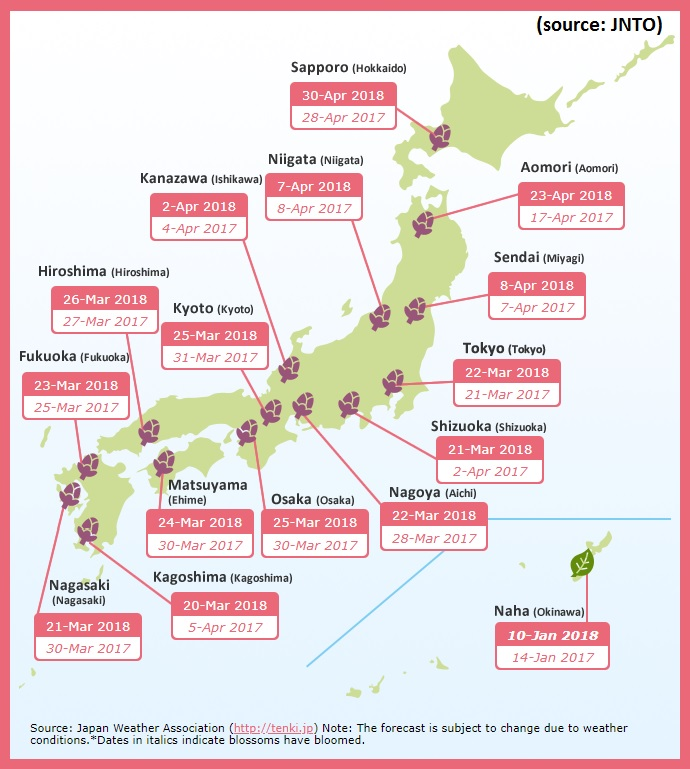 Cherry blossom hanami 2018