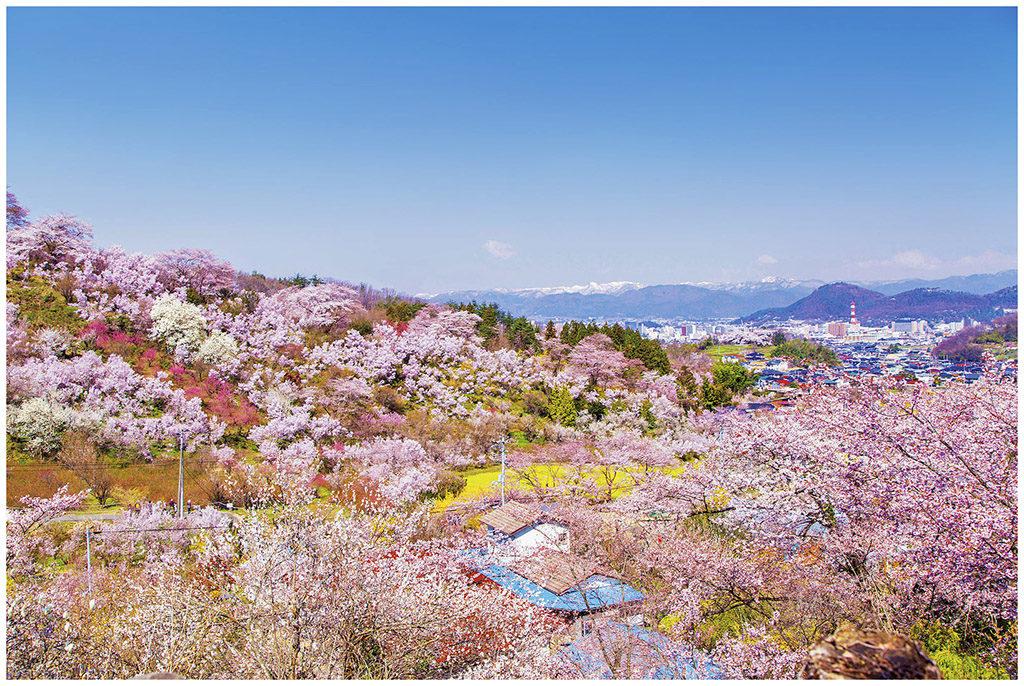 Cherry blossom at HanamiYama Park