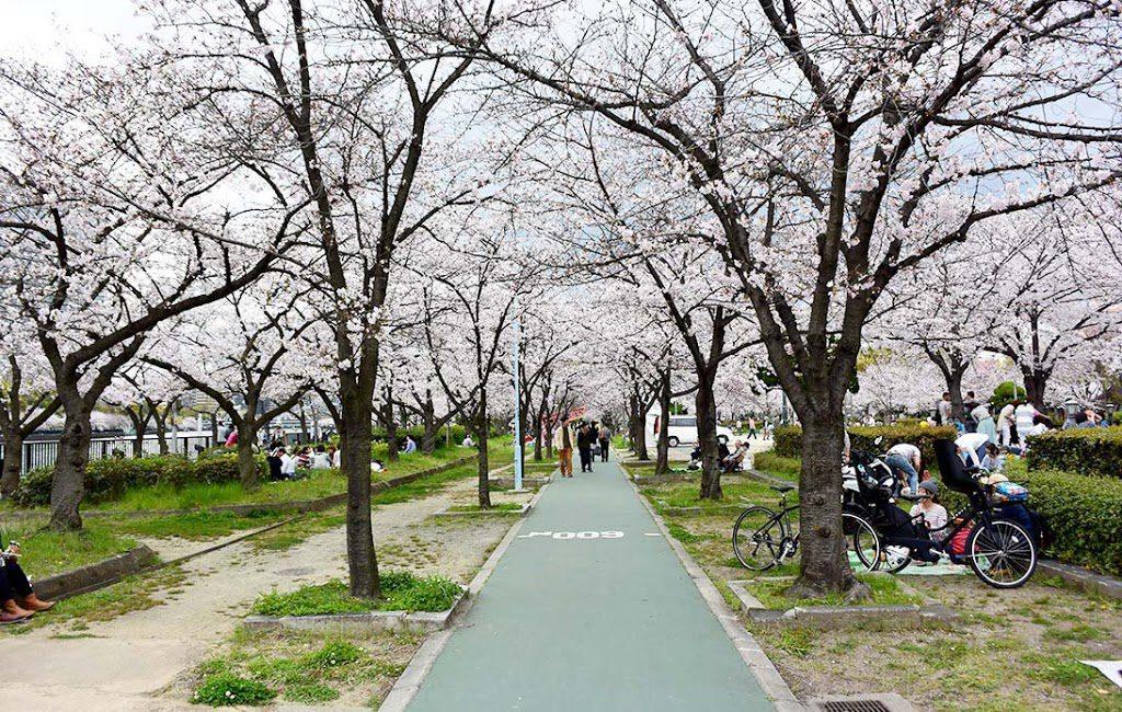 Cherry blossom at Kema Sakuranomiya Park