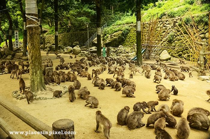 Takasakiyama Monkey Park Beppu Japan
