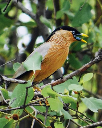road trip from delhi to bharatpur bird sanctuary