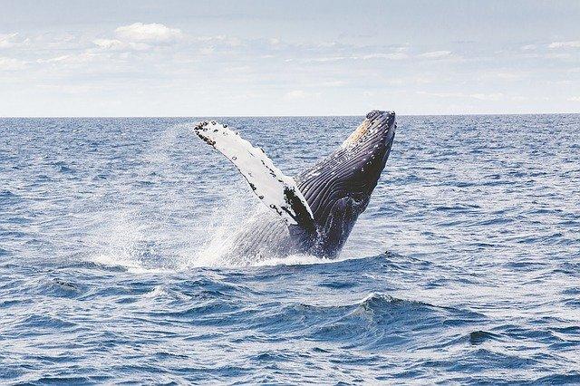 whale watching sri lanka